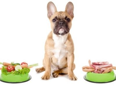 Human Foods: What Your Dog Can And Can't Eat